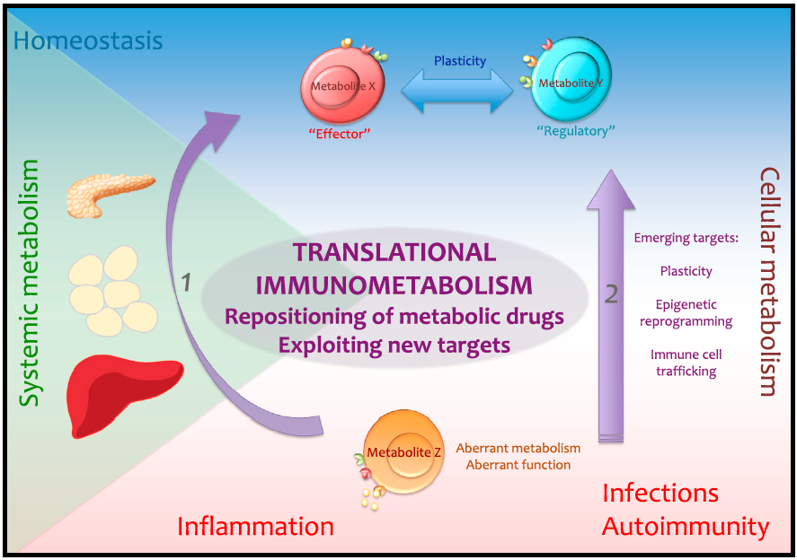 The Cellular and Molecular Basis of Translational Immunometabolism